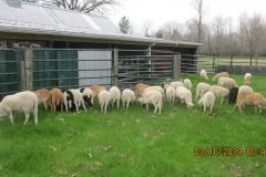 new-lambs-winter-2019